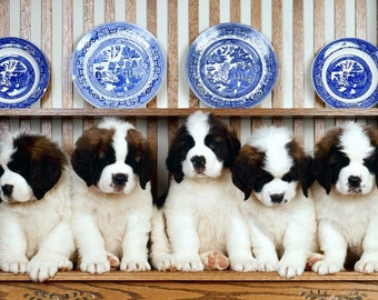 Pack of 4 Dog Puppy Saint Bernard Puppies Dogs Greeting Stationery Notecards/ Envelopes Set