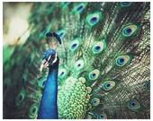 Peacock photograph - metallic bright colorful wall art - home decor - peacock art print - green blue art print - peacock home decor