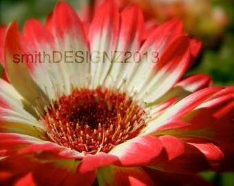 Floral Photography, Daisy Macro Photo, Photography, Nature Photography, Vinyl Wall Decal, by Abby Smith