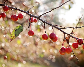 Red Crab Apples Fine Art Photography Tree Berries Fall Autumn Cranberry Brown Earth Warm Tones Nature Home Decor Wall Art
