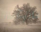 Oak In Field II Photo 8X10 Fine Art Photograph Print Oak Tree In Misty Foggy Fog Mist Rural Nature Scene Sepia