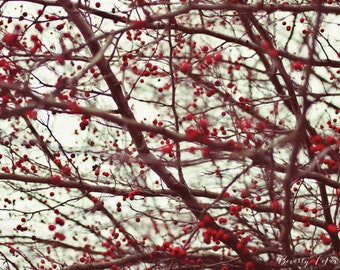 red, nature, berries, winter,  fine art photography