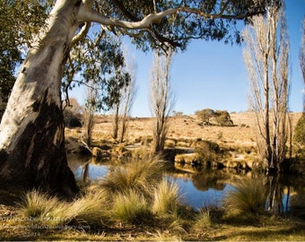 gum tree,creek,alpine,Thredbo river,river,landscape,water,reflections,river bank,country side,