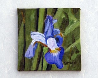 Iris by Audrey Grice