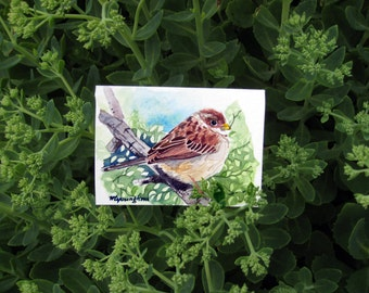 ACEO Limited Edition 1/25, Sparrow in poplar leaves