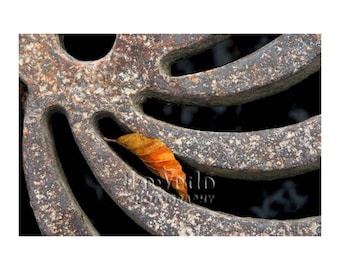 Paris Leaf, Zen Photo, Man Meets Nature, Maple Leaf Autumn, Swirly Curves, Abstract Photography