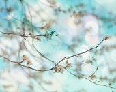 Bainbridge Island Spring Flowering Tree Photograph  Blue Sky Dreamy Bokeh  Elegant Floral Home & Office Decor  fpoe