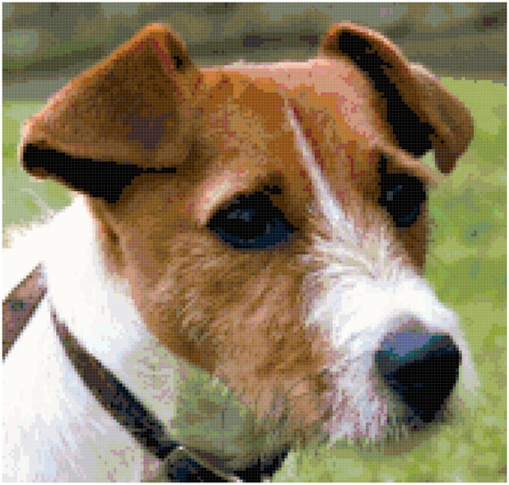 Dog Has Diarrhea On Rug: Jack Russell Terrier Counted Cross Stitch Pattern Chart PDF