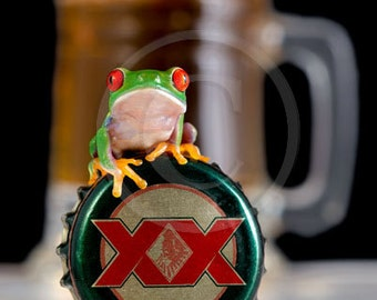 Beer Drinker, Frog and Dos Equis, Beer Mug, A Baby Frog on a Beer Cap, Man Cave