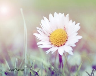 Nature Photography, Botanical Print, White Wall Art, Girls Room Art, Daisy, Flower Wall Art, White Yellow Nursery Decor, Girls Room Decor