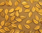 14 pc. Tiny Raw Brass Veined Leaves: 11mm by 5mm - made in USA - RB-226
