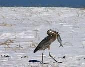 Florida Bird Makes A Fine Catch 16 x 20 INSTANT DOWNLOAD