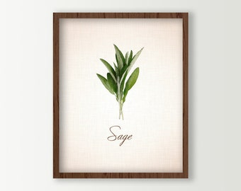 Cooking Herbs Wall Art - Sage Leaves Culinary Prints - Kitchen Art - Food Art - Herbs Kitchen Decor - Green Kitchen Decor - Kitchen Sign