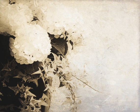 White Hydrangea. Flower. Blossoms Nature Photography. Botananical Print by OneFrameStories.