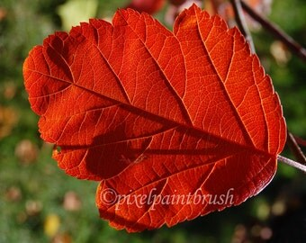 DIGITAL DOWNLOAD, Red Leaf with Shadows, Soft Green Background, Fall Colours,  Simplicity