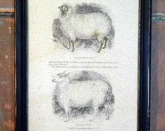 Stunning Primitive Print of  Two Sheep Framed  in a Vintage Frame