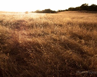 Coupon Code 1STPURCHASE, Golden Autumn Field Photography Print, Gold, Brown, Tan, Hills, Fall, Nature, Wall Art, Home Decor, 8x12 Inches
