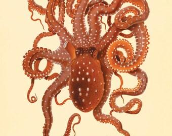 Octopus art print Vintage old prints sea art print Nautical art print Ocean art print Natural History Victorian art print antique wall art