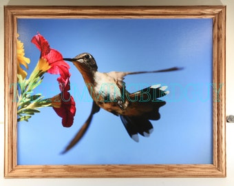 Large 18 by 24 Hummingbird photograph printed on canvas