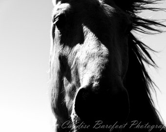 Black and White Photography, In the Wind, Horse Photography, Equine Photography, Nature Photography, Wall Art, Equine Art, Wild West