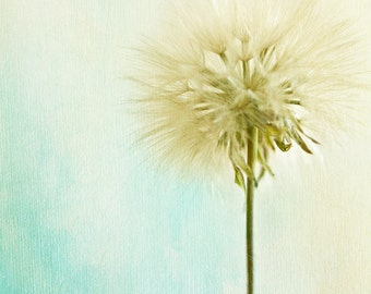 Dandelion Photography - Blue and Green Art - Home Decor - Wall Art - Dandelion Wall Art - Nature Photography - Bathroom Decor