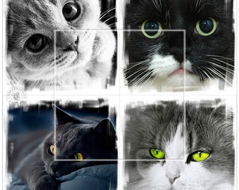 Cool Cats - 6 Digital Collage Sheets CP-159 - 4x4 inch tiles for Scrapbooking Coasters Stickers