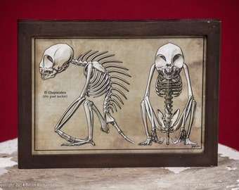 Chupacabra Skeleton Faux-Scientific Print