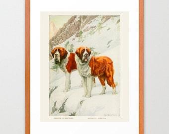 Dog Poster - St. Bernard Art - St. Bernard Poster - Dog Art Prints - Vintage Dog Illustration - Dog Wall Art - Antique Dog Art