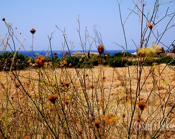 A Glimpse Of Cyprus - Fine Art Photography - nature photography - 8x12 print - seascape - botanical print - wall decor - summer photo