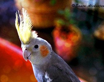 Parrot - Fine Art Photography - Digital photography download, instant download, parrot photography, animal photography, Wall decor, corella