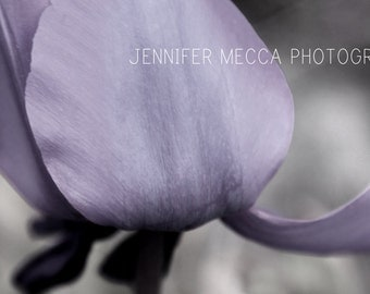 Photograph - Tulip Petals Black and white with Purple tint  Fine Art Photography Print Wall Art Home Decor