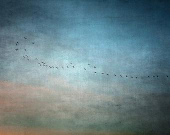 photo print, photography print, home decor, large size wall art, photo art, blue sky, birds, dreamy, blue sky sunset