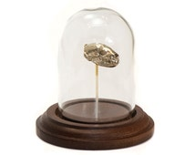 Skull Replica Badger Skull Glass Dome Display Animal Skull Home Decor White Bronze