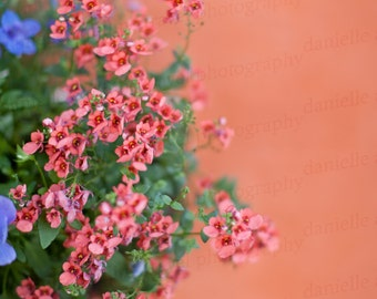 Charleston South Carolina Flowers Floral Photo Photography Print 8x10 Orange Coral Art