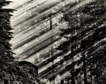 Landscape Photography, Mount Rainier, Sunbeams, Pine Trees, Summer, Fine Art Black and White Photography, Wall Art, Home Decor