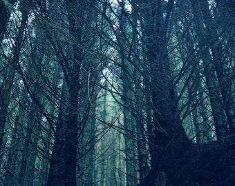 Deepwood, original fine art photography, print, highland, nature, 8x12, forest, tree, woodland, scotland, blue, pine, green, dark, 8x10