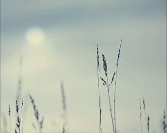 Cold Grass, original fine art photography, print, elie, minimalist, sky, scotland, modern art, color, square, decor, blue, sun, winter