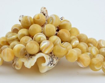 15 Inch Natural Brown and White Conch Shell Beads 8mm Round Bead