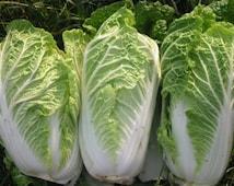 1000 chinese cabbage seeds, vegetable seeds, heirloom seeds