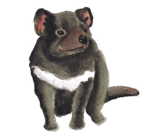 Watercolor Baby Tasmanian Devil Watercolor Art Print Nursery
