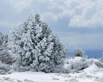 Snowy Tree's, Fine Art, Winter Scene, Snowy Landscape, Winter Lanscape, Wall Decor, Nature