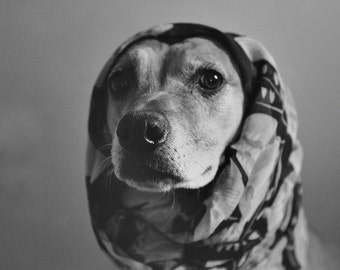 Don't corner me - Dog photography black and white art print