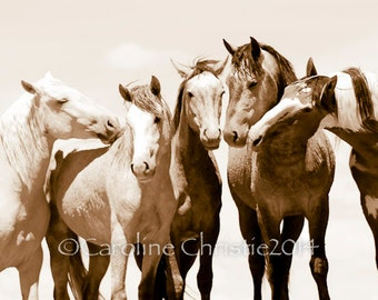 "Wild Horse Photo, sepia tone, wild mustangs, horse photo : "" Just Me and The Boys """