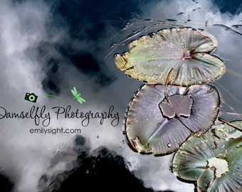 Rainbow Lily Pads in Cloud Pond Metal Photograph