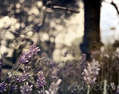 AMSTERDAM LAVENDER, Springtime in Europe, Purple Flowers, Bicycle Photo, Grunge Texture, Calm, Floral Print, Dreamy Photography, Netherlands