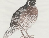 Quail Linocut - California Quail Lino Block Print, Bird, Feathers, Nature Art