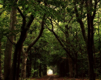 green tunnel of trees landscape photography country road home decor office decor