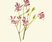 Flower Print - Rhodora - Vintage Wild Flower Print - Botanical Book Print - Wild Flowers of America - Azalea - Mary Vaux Walcott