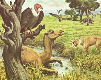Prehistoric Animal Print - Vintage Animal Print - Animal Book Plate - Saber Tooth Tiger - Sloth - Vulture Teratornis - Mary Butler - 1969