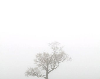 Lone Tree, Fog, Morning, Field, Landscape, Earth Tones, Nature Photography, 8X10 Mat, Ready to Frame, Fine Art, Wall Art, Wall Hanging
